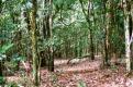 karura forest Institute of primate researc