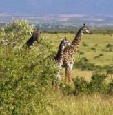 Animal Types ain Kenya