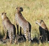 Safaris in Kenya and other East Africa Countries