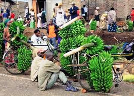 FOOD OF NYANKOLE PEOPLE IN OF UGANDA