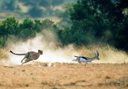 the best of kenya tourism safari adventure