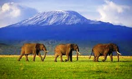 landscape of Amboseli National Park