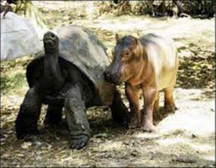 Haller Wildlife Park mombasa kenya