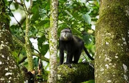The Primates of Kakamega Forest National Reserve Western Kenya