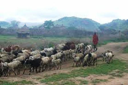 Karamojong, life revolving around cattle