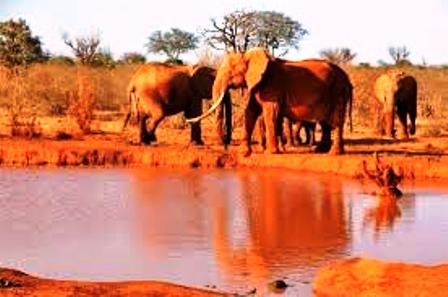 Brown Elephants of Tsavo East National Park in Kenya