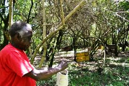 Kuria Traditional Herbalist