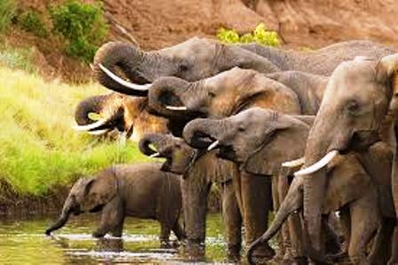 the elephants in shaba game reserve