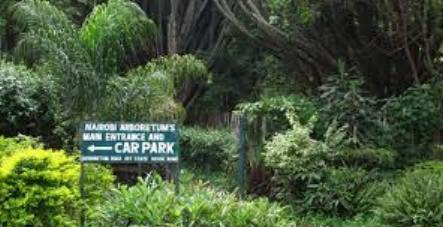 Nairobi Arboretum huge variety of plants in varying ages and sizes
