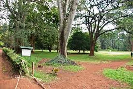 Nairobi Arboretum resting places