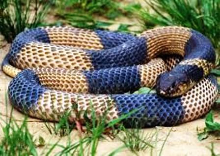 Nairobi Snake Park for different types of snakes in Kenya