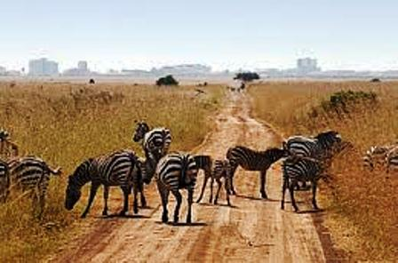 .Nairobi National Park