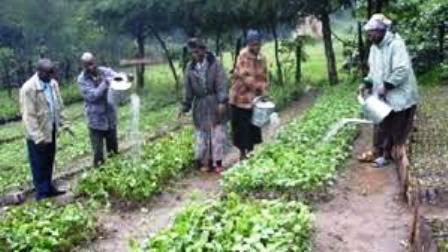 The Nandi People of Kenya Cultivating Crops in Nandiland