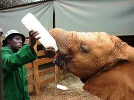 The attendants at David Sheldrick Elephant Orphanage