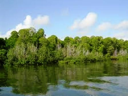 Tana River Delta for baboon