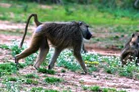 Tana River Primate National Reserve