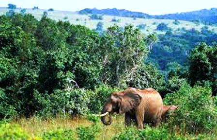 Shimba hills game park sancturay