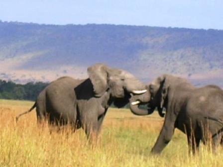 Adventure in Kenya