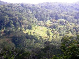 Amani Nature Reserve Tanzania Coast