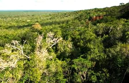 Arabuko sokoke forest national park