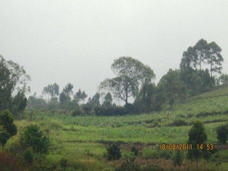 Baraka Agricultural College Kenya