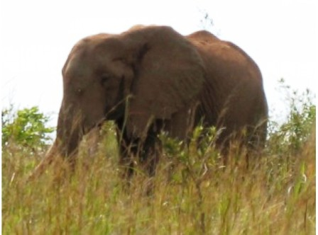 The Elephants Wildlife in Bisanadi National Reserve