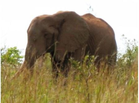 The Elephants Wildlife in Bisanadi National Reserve