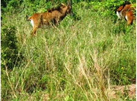 Wildlife in Bisanadi National Reserve