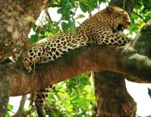 Southern Kenya Tourist Attractions