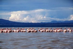 Lake Nakuru National Park and its Safari Hotels and Accommodation Facilities