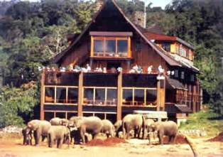 The Elephants to watering hole in Aberdare