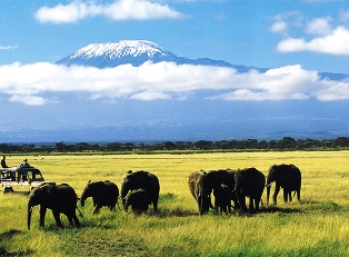 Amboseli national park on the shadow of Mt Kilimanjaro