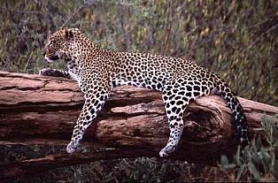 Bisanadi National Reserve