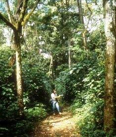 Kakamega Forest in Kenya
