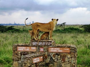 Half Day Tour to Nairobi National Park & Orphanage