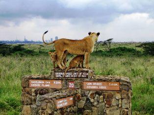Half Day Tour to Nairobi National Park & Orphanage