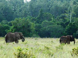 One and 1/2 Days Kenya Safari to Mwalujange and Shimba