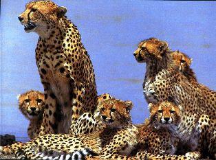 half day Kenya safari from Mombasa to Mwalujange and shimba hills national park.
