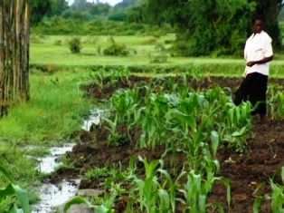 good  climate for growing maize