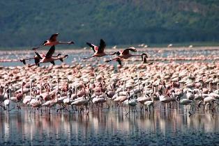 Full Day Tour to Rift Valley & Lake Nakuru