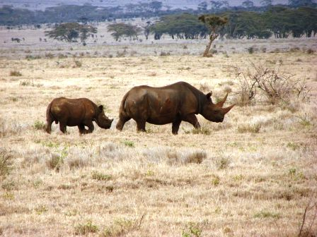 The Rhinos of Laikipia Game Reserve