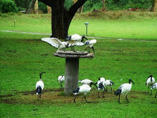 Lake Naivasha Country Club bird sanctuary