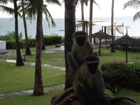 Lake Victoria Serena Resort - The Best Luxury Hotel in Uganda Kampala City