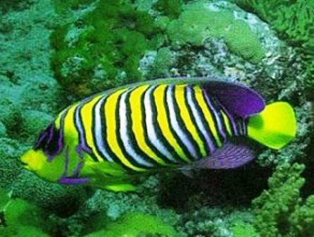 Attractions and Wildlife at Mombasa Marine National Park
