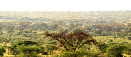 Attractions and Wildlife of Mwingi National Reserve