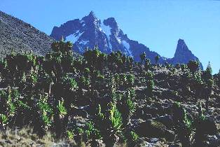 the vegetation of Mount Kenya