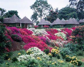 Mountain Village Lodge