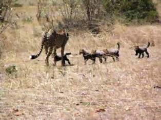 Safari to Wildlife and Adventure