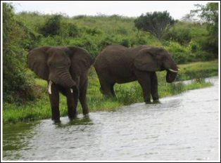 Kenya's wildlife attracts