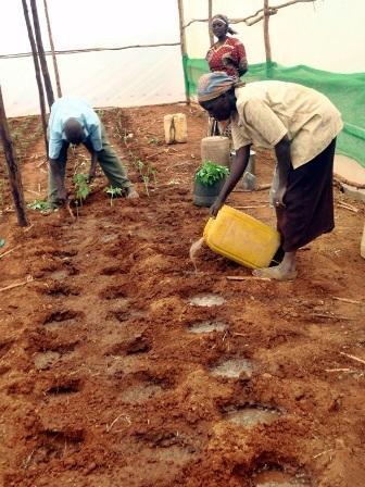 Ukamba Agricultural Institute Kenya